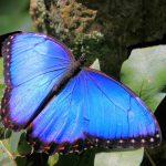 Rainforest Butterflies