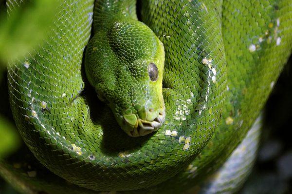 Rainforest Snakes